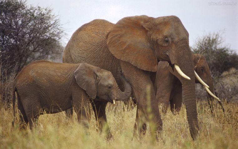275932_Papel-de-Parede-Grupo-de-Elefantes-Colecao-Wild-Africa_1920x1200