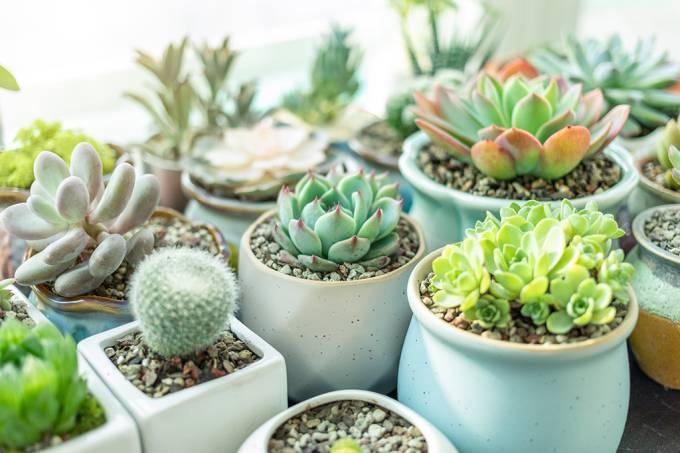 plantas-vasos-ar-puro.jpg